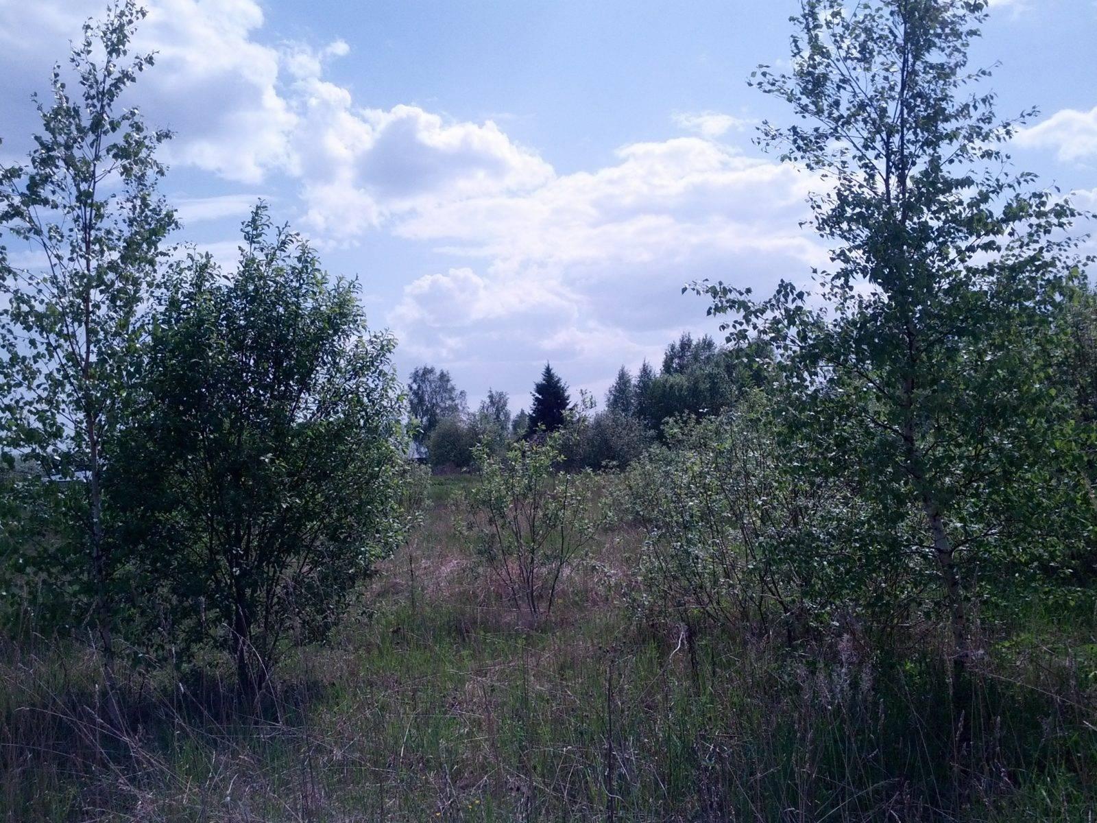 Земля с деревьями фото